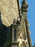Peregrine on Chichester Cathedral