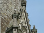 Male peregrine on Chichester Cathedral