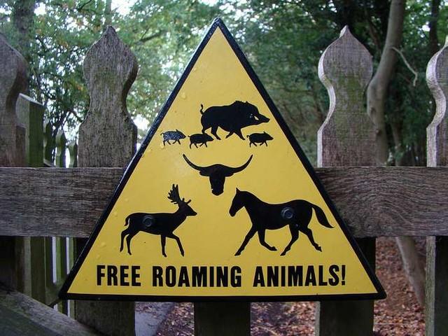 Roaming animals - Knepp Estate