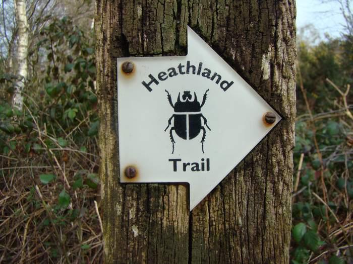 Heathland Trail. Iping Common