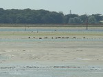 Seals at Thorney island