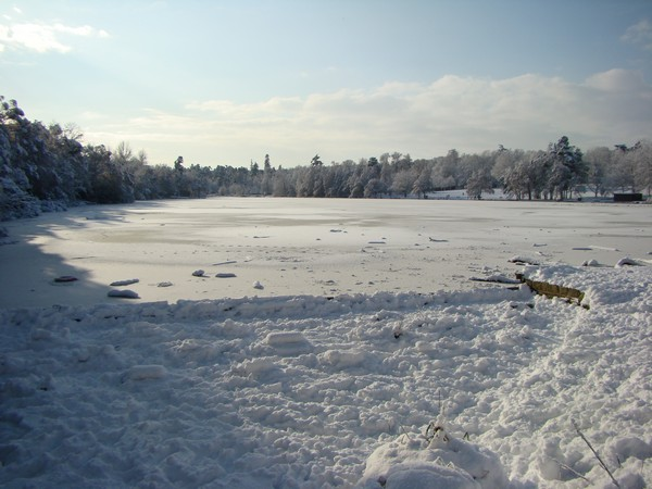 Tilgate lake frozen