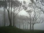 Fog at Chanctonbury Ring