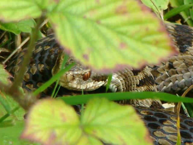 Sneaky snake.